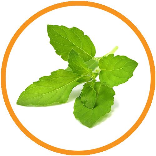 Basil-Leaf-Extract