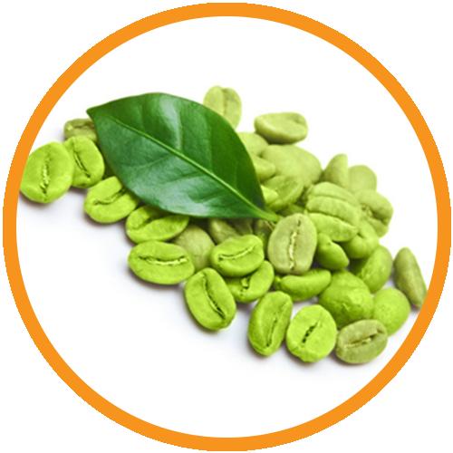 Coffee-Bean-Extract