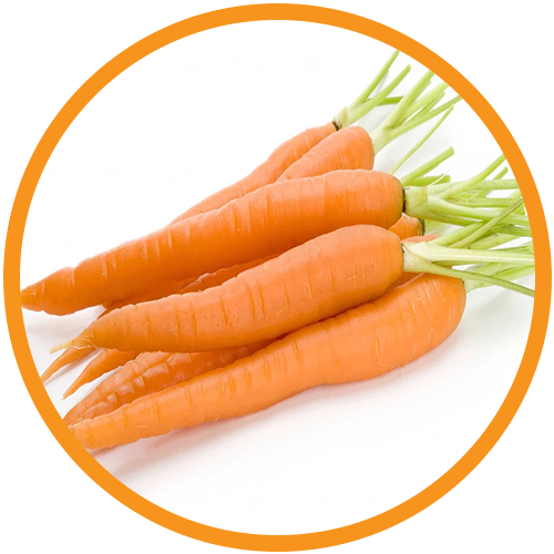 Carrot-Seed-Oil