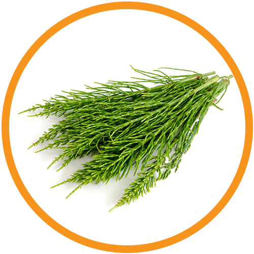 Horsetail-Extract