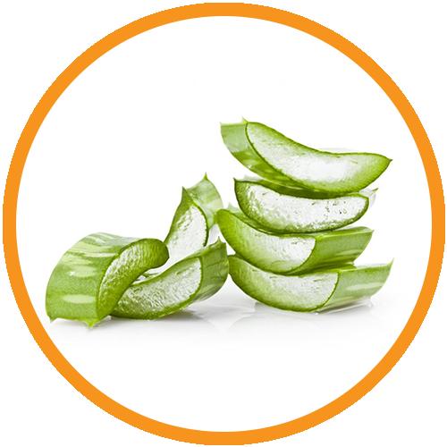 Aloe-Vera-Leaf-Extract