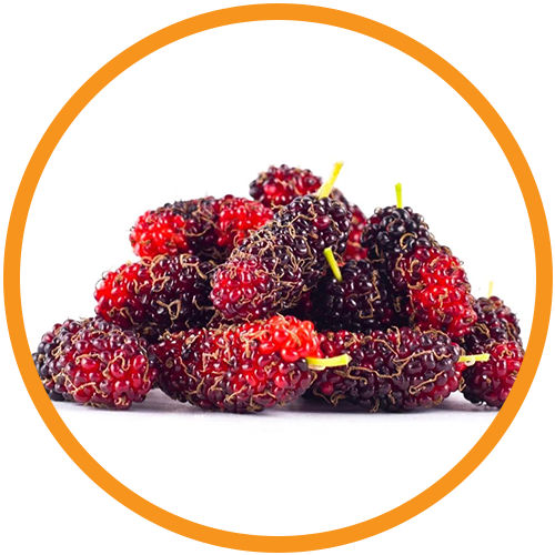 Mulberry-Extract