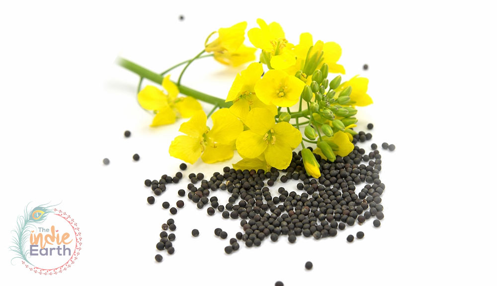 Brassica-Seed-Oil-for-Skin